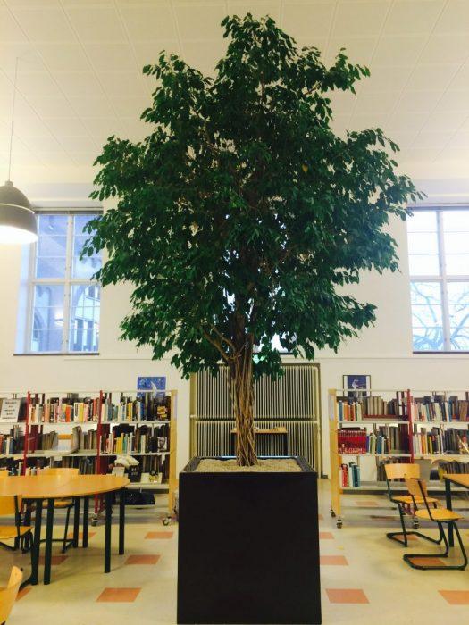 Olympiabibliotekarien
